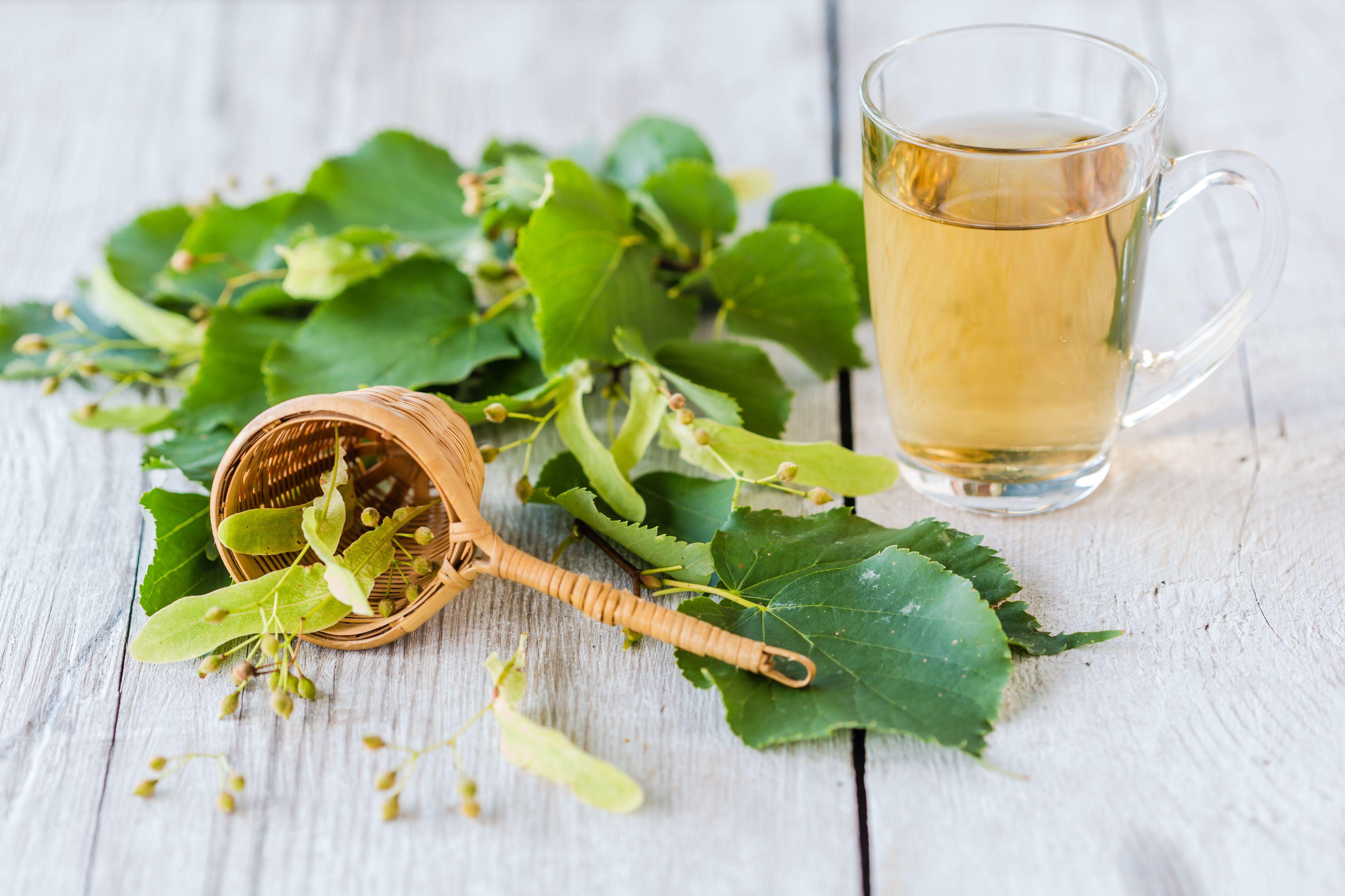 липовый чай полезные свойства и противопоказания